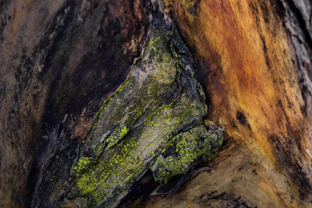 Colors On An Old Log