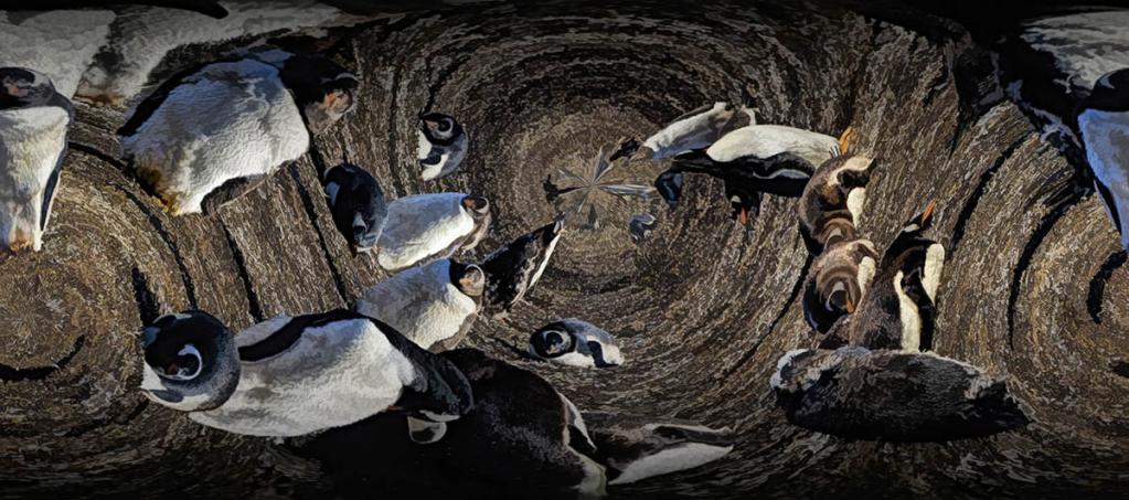 Penguin Blender
