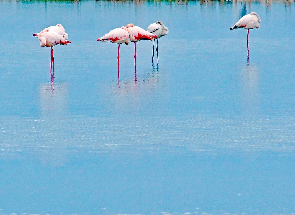 Flamingos resting!