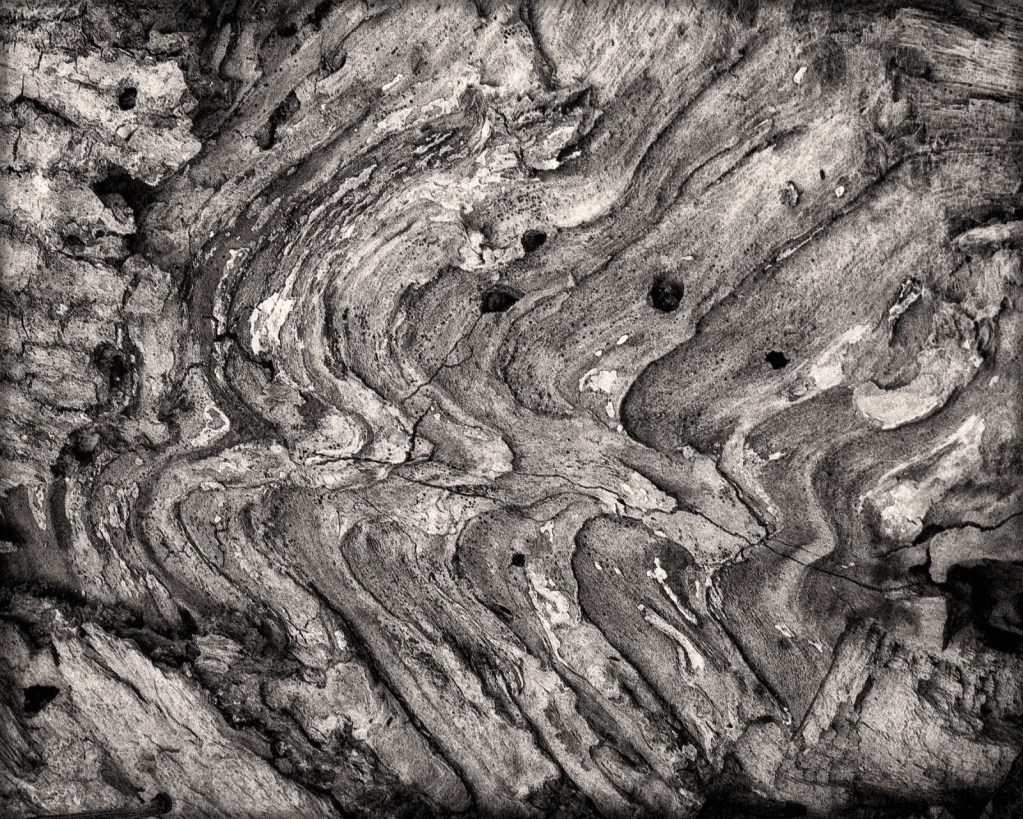 Wood Pattern in Black and White
