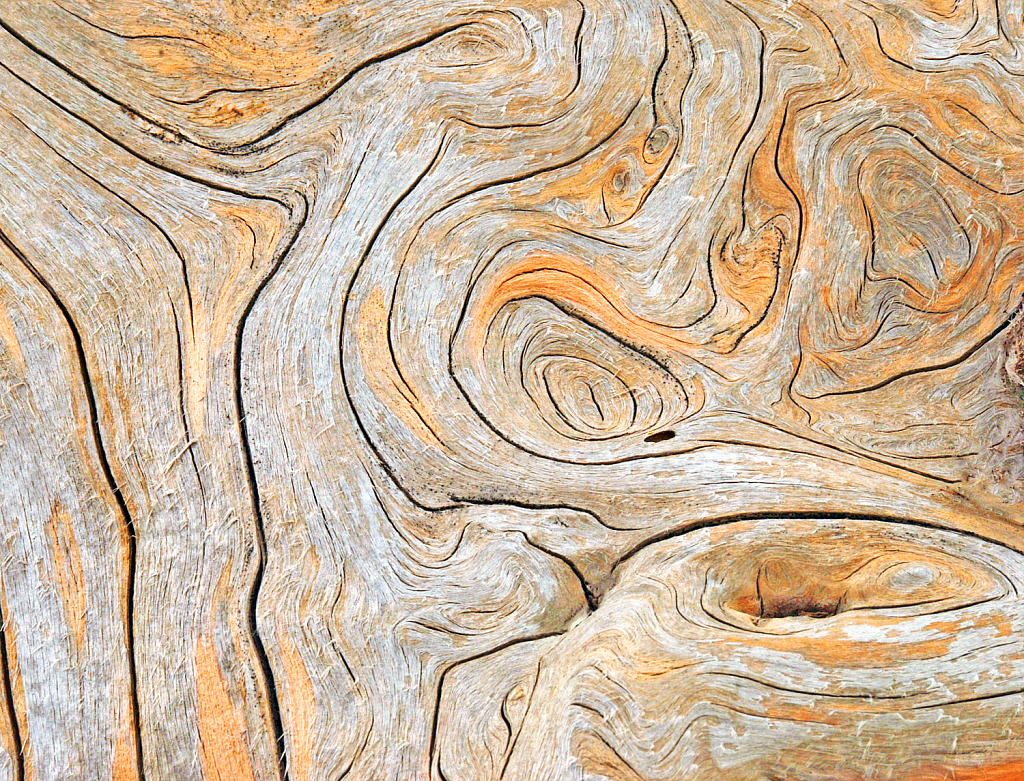 Natural design on the peeled off tree trunk.