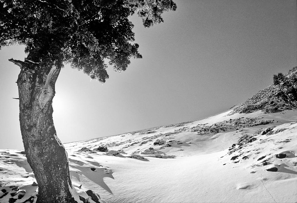 Standing alone on the frozen ridge.