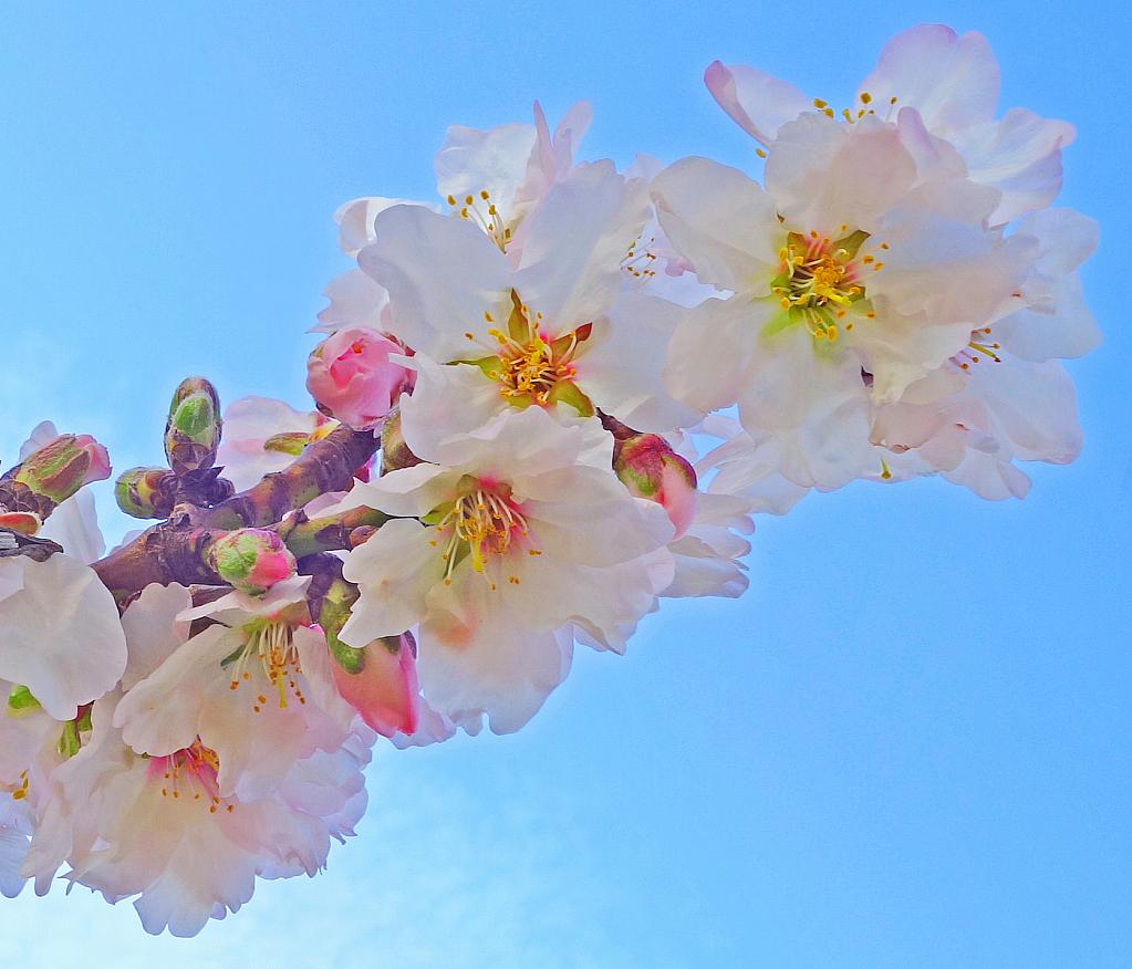 A sense of the oncoming springtime!