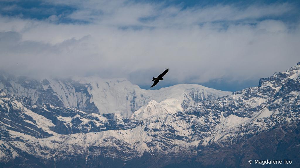 Eagle at Himalayan Mountain Range