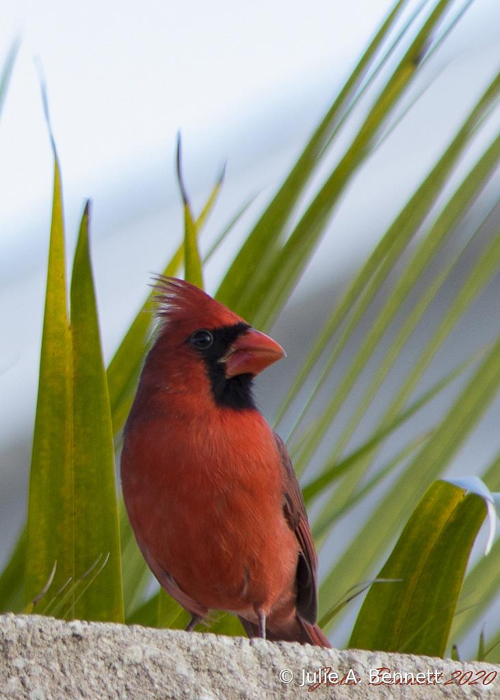 PapaBird