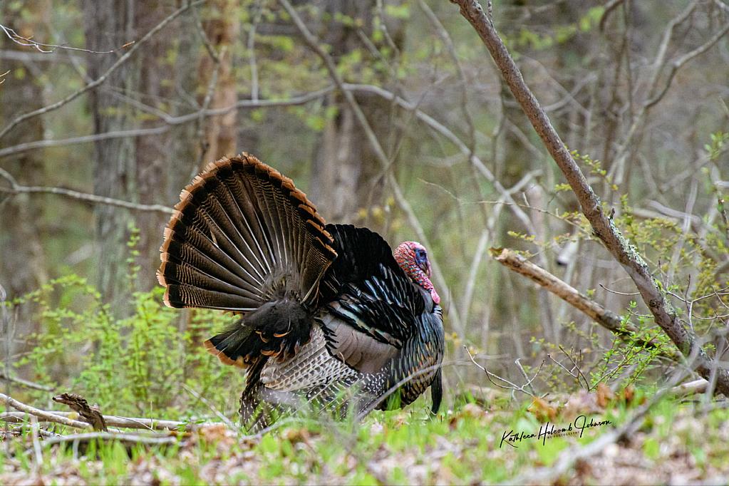 Busy Turkey!