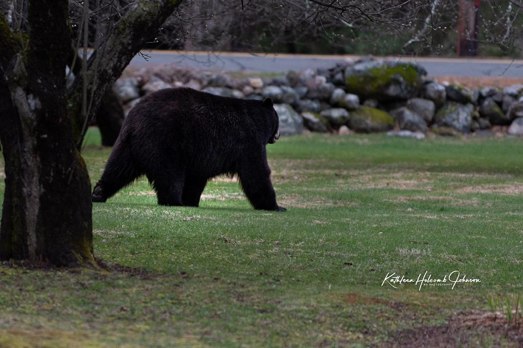 Big Boy In My Front Yard!