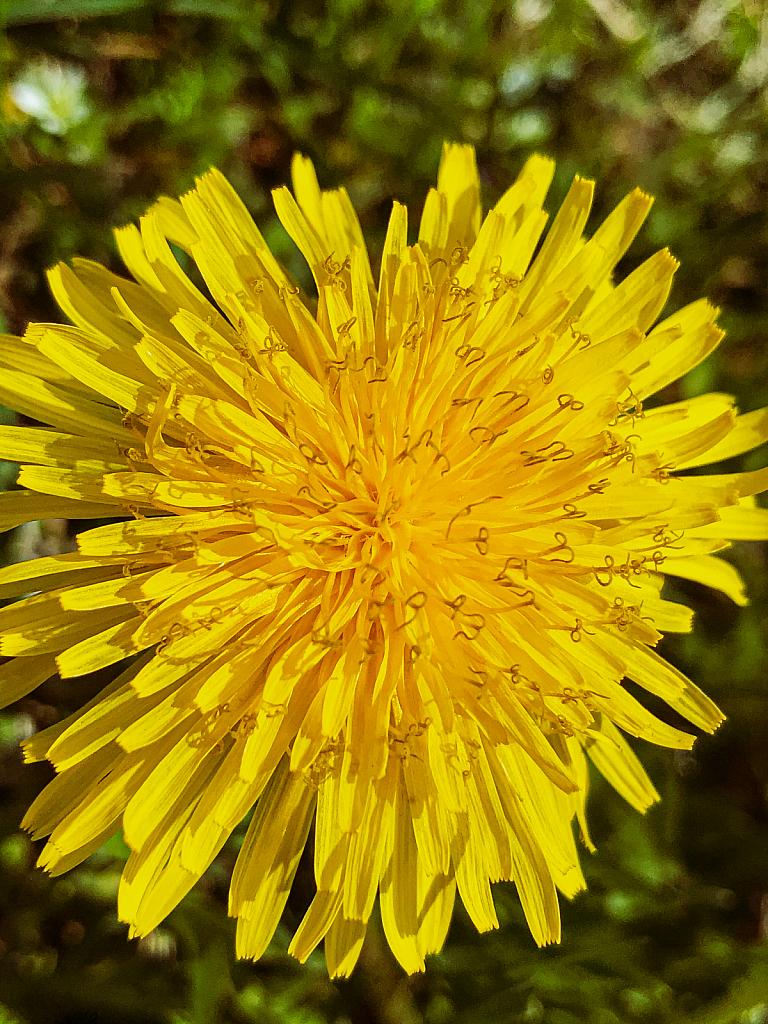 Yellow Wonder!