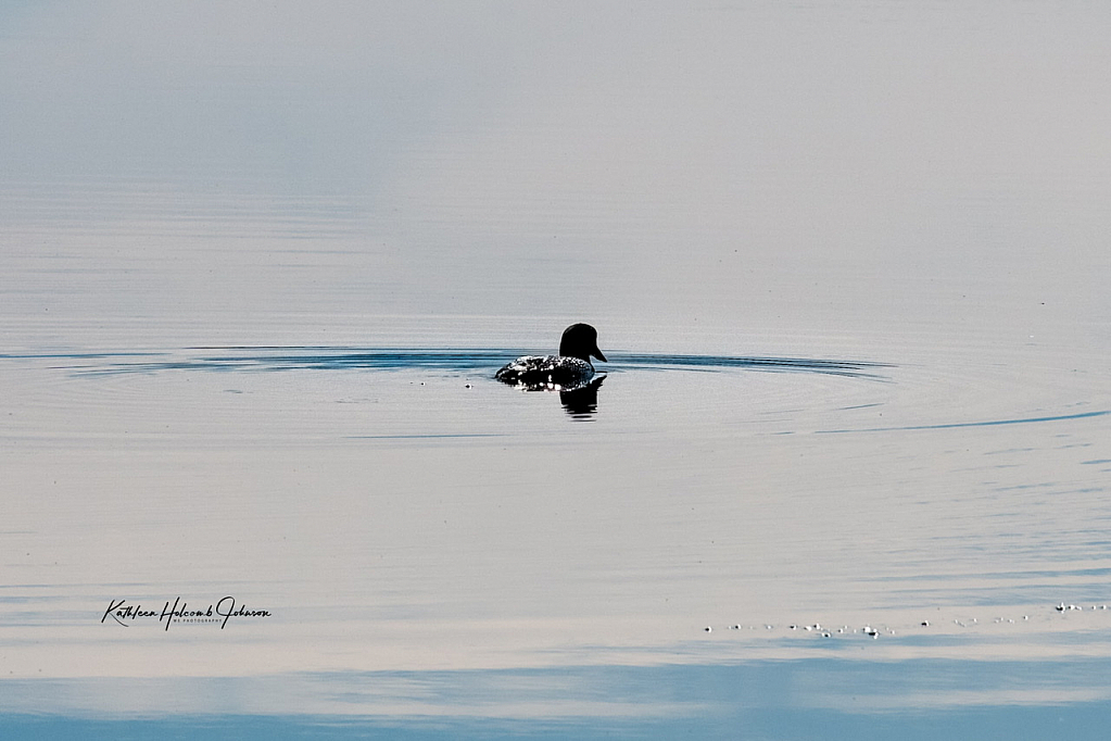 Loon - Enjoying The Beginning Of Spring!