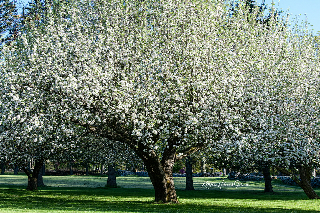 My Front Yard - Spring 2020