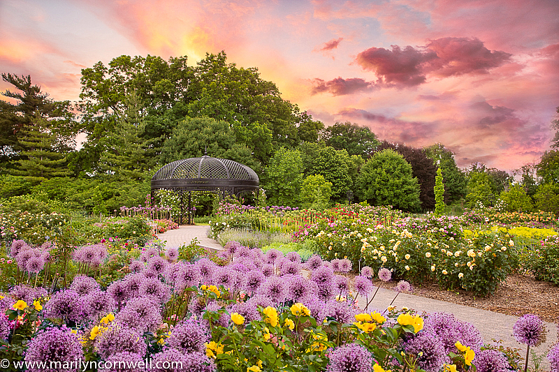 In the Garden of Romance