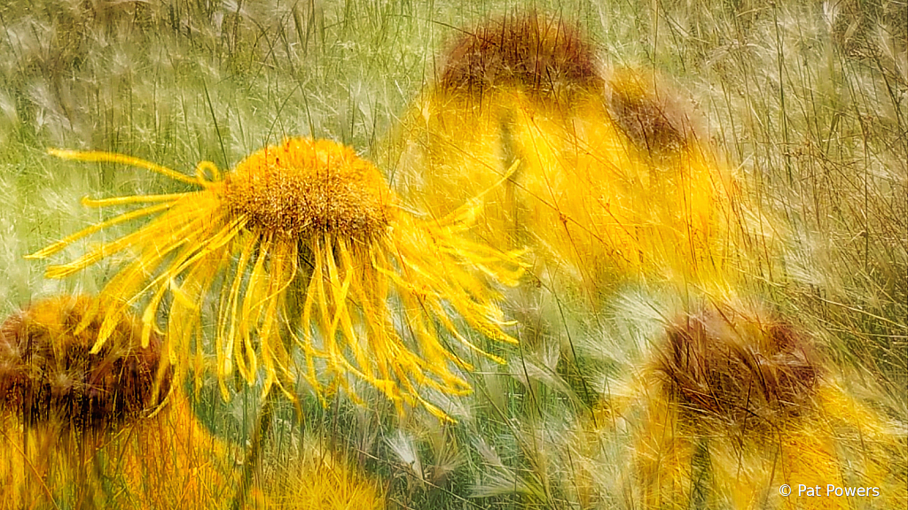 Flowers with Texture