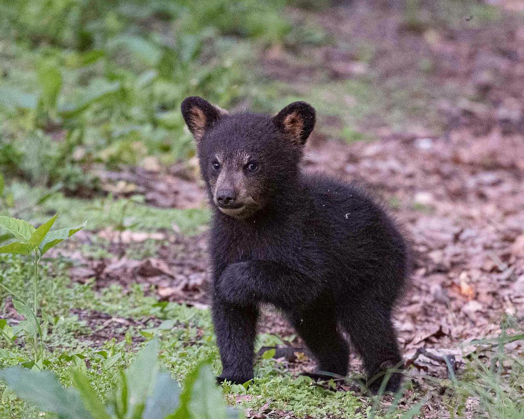 Cute as a Cub