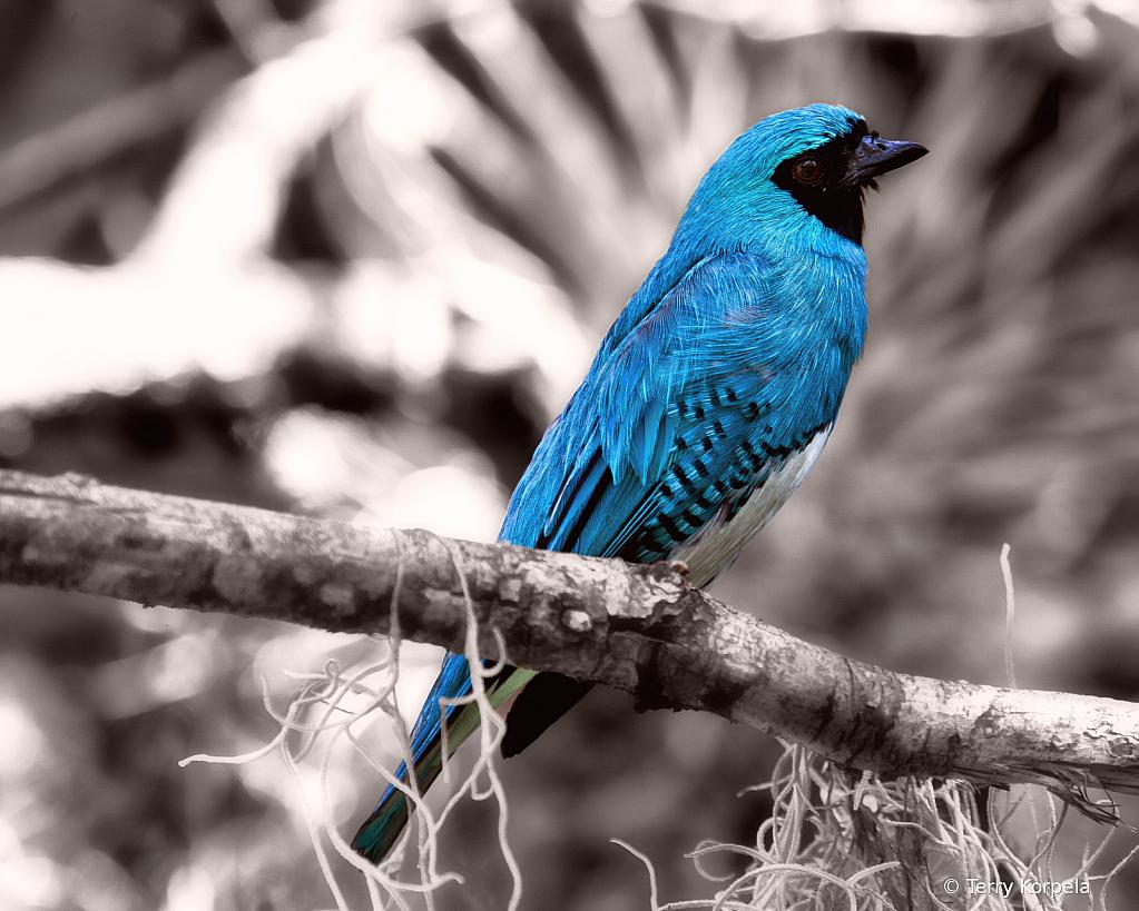 Blue Bird of Happiness!