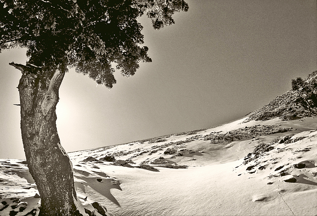 Frozen ridge!