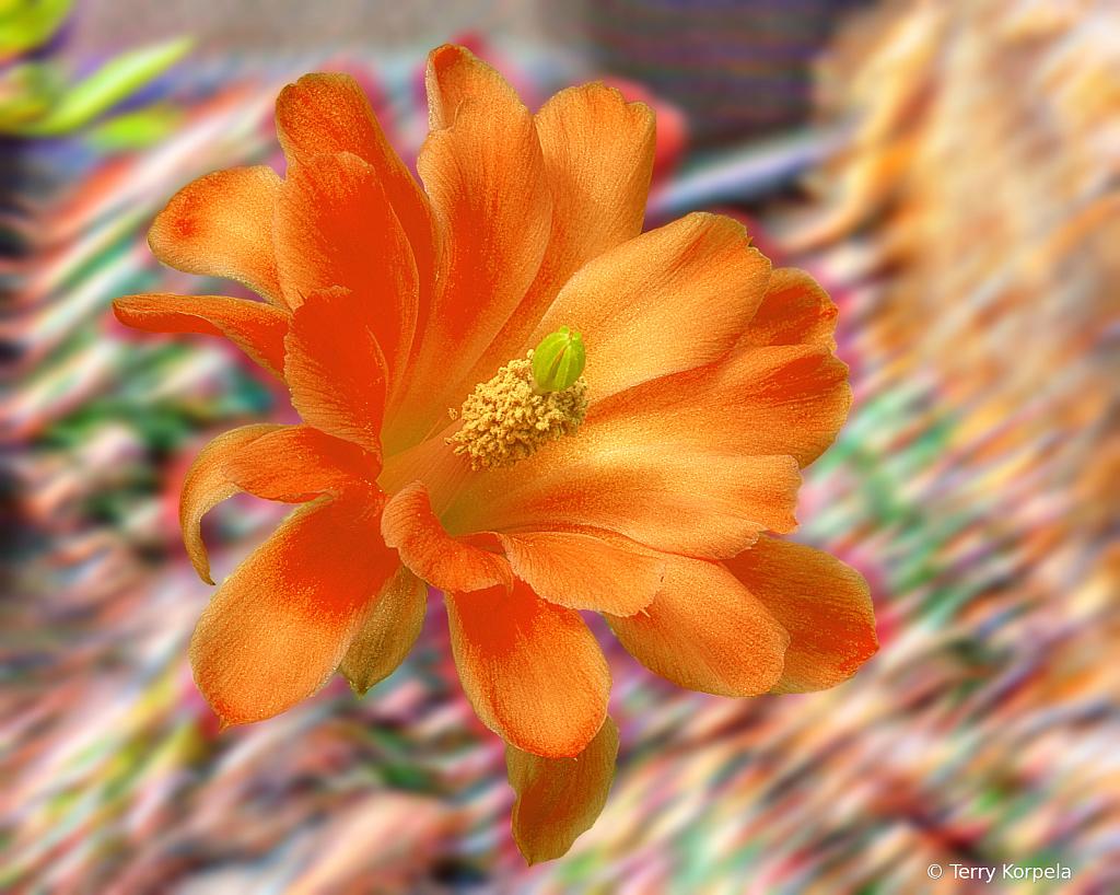 Berkeley Botanical Garden Cactus Flower