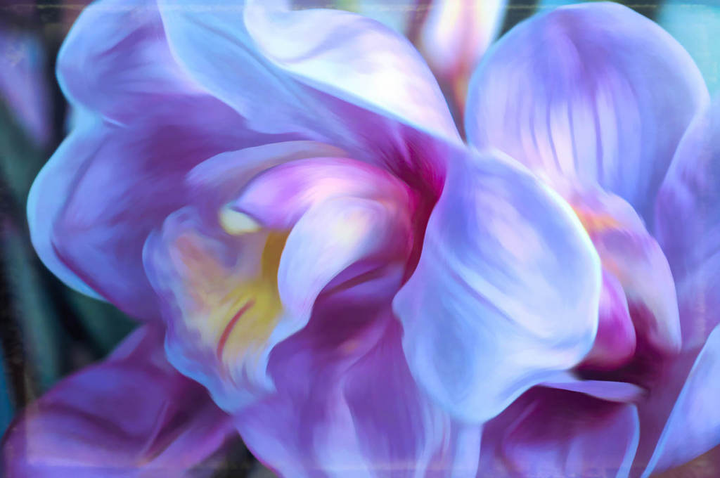 Dreaming Orchid