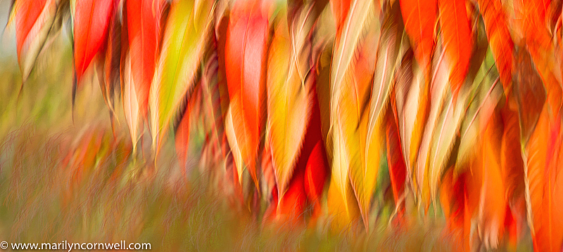 Feathers of Fire in the Autumn Wind