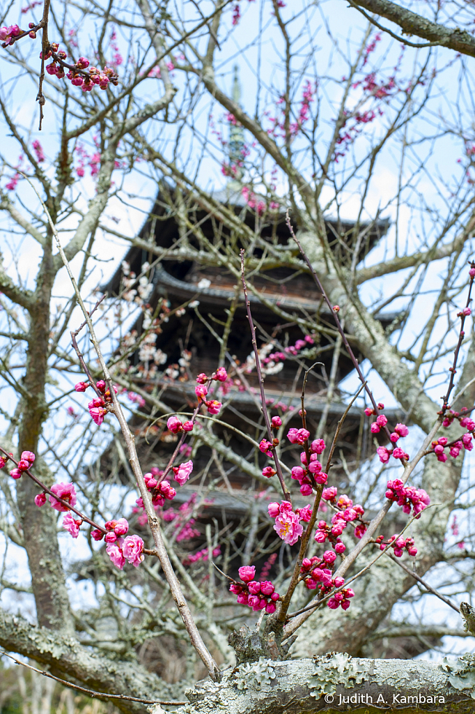 Kokubunji Pagoda 1