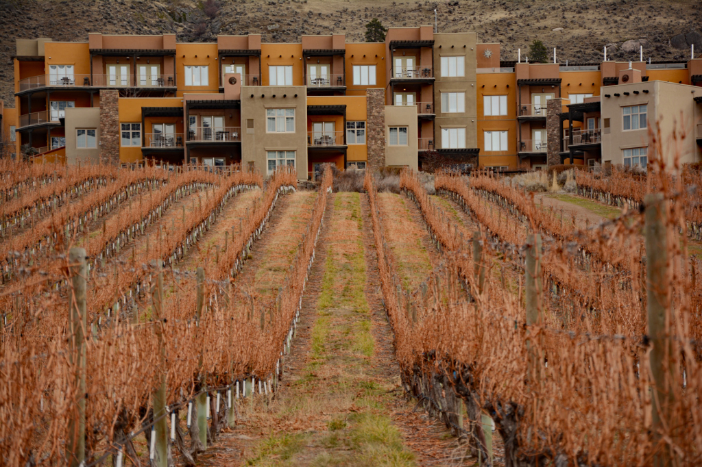 Hotel Vineyard