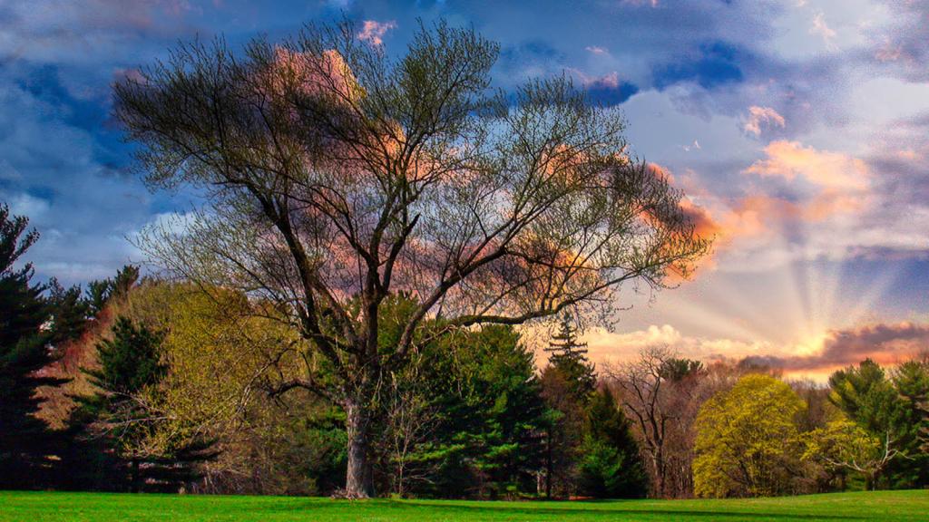Sunset In Old Westbury Gardens