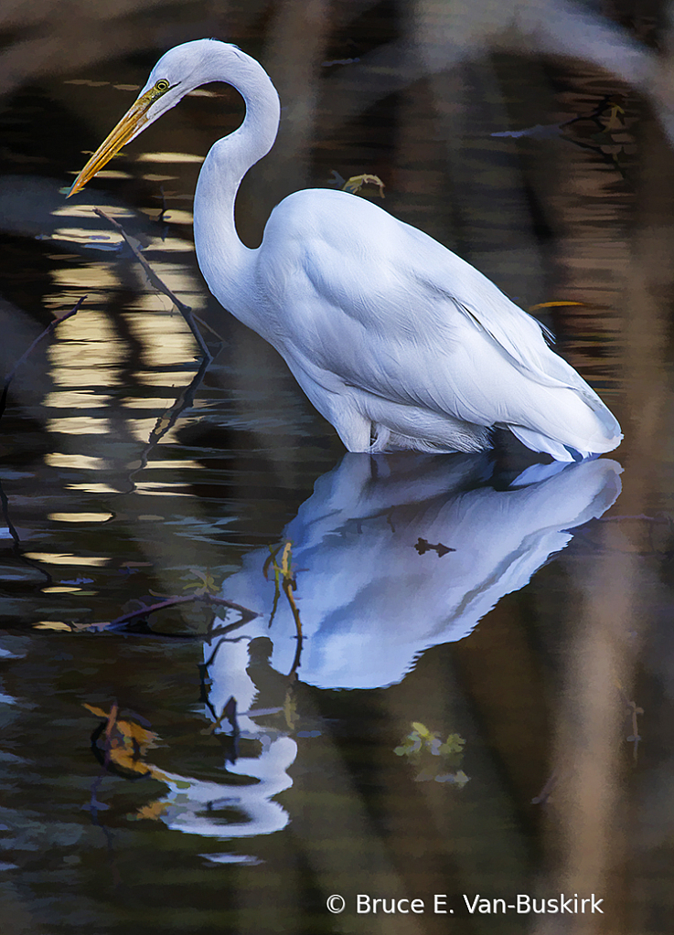 Egret with nice light reflection