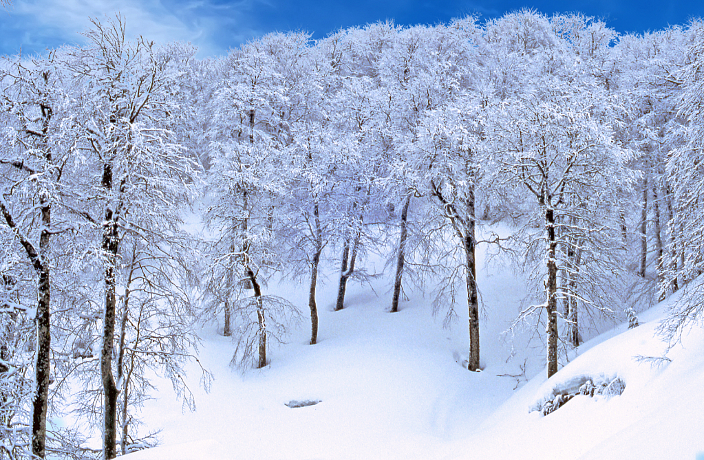 Deep in the Snowy Forest.