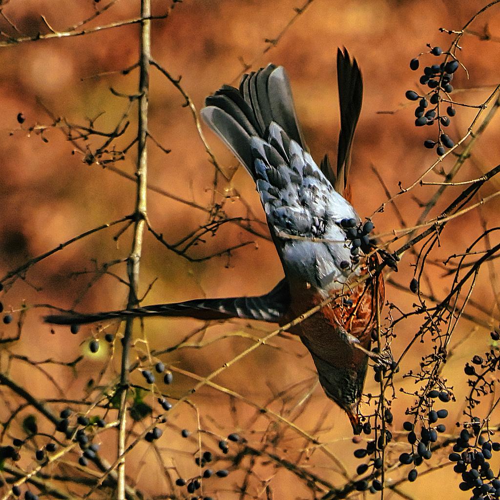Robin Reaching