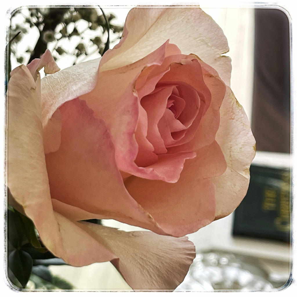 Beautifully Imperfect Rose