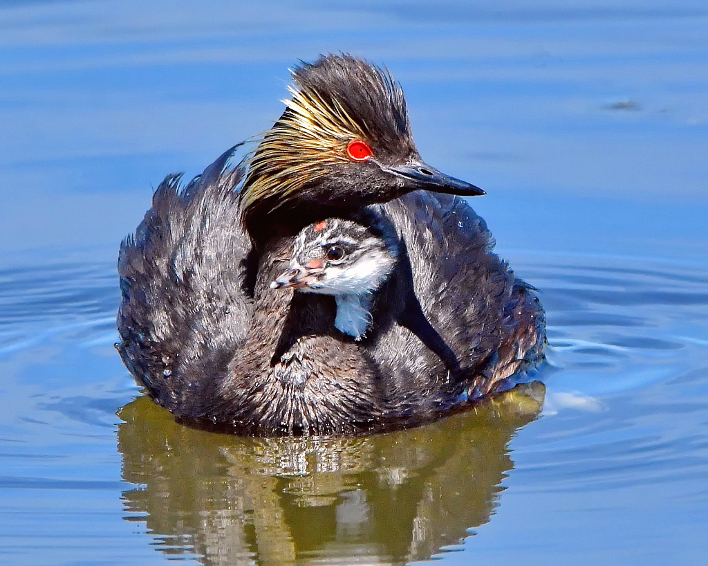 Mother and Little One