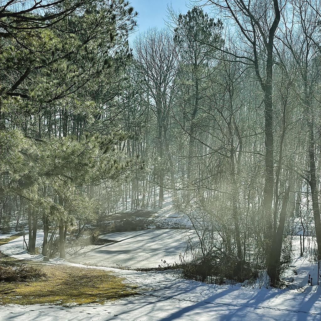 Low Fog over Frozen Pond