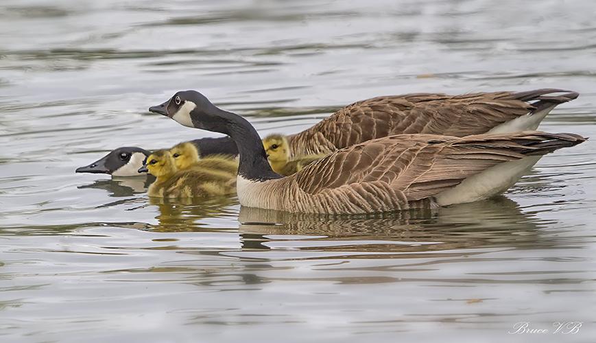 Protective Parents