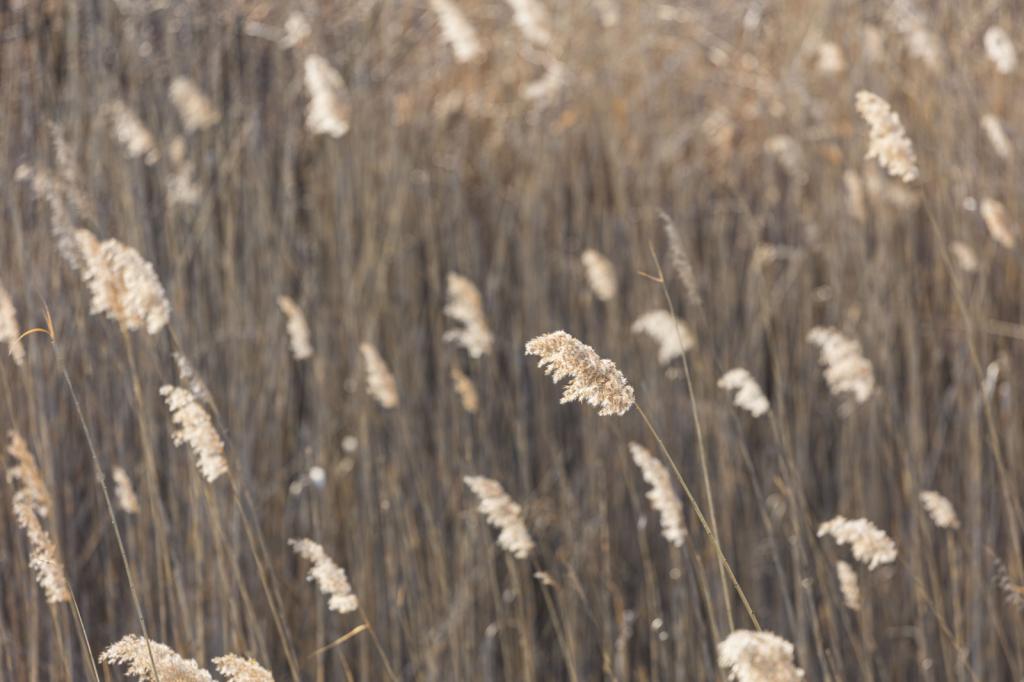 Fields of Patterns
