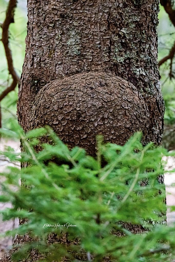 Stranger In The Woods!