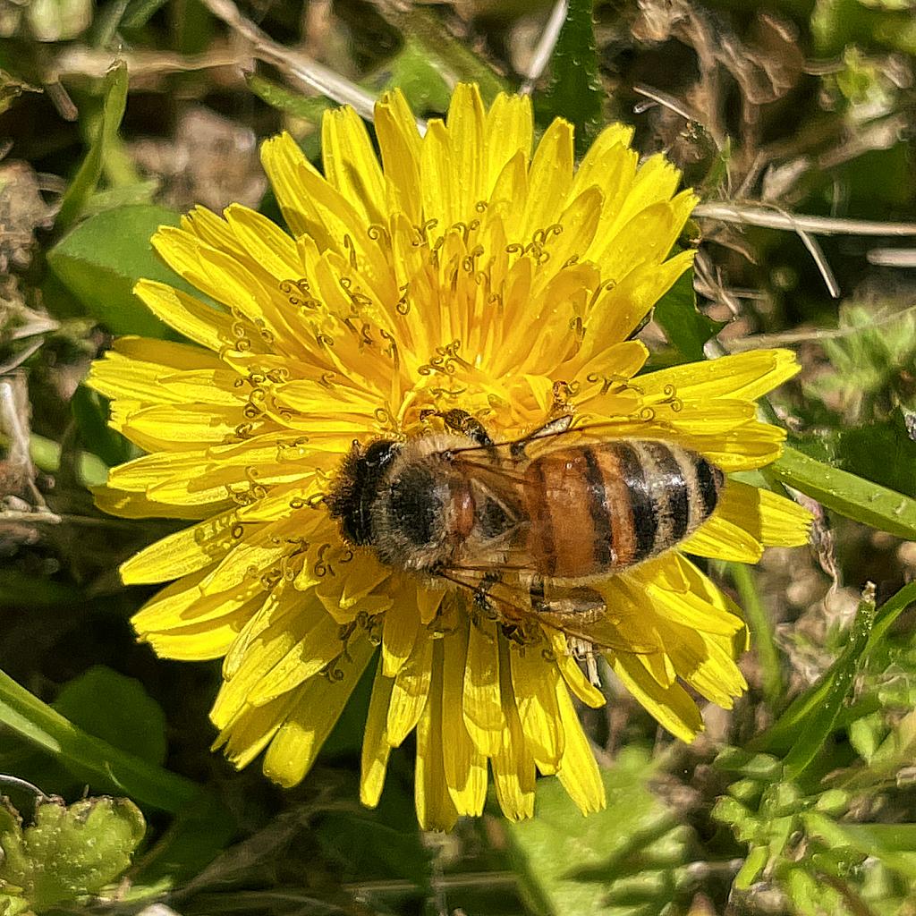 Bee  2021 Photo Challenge (Day 11) Rule Breaking