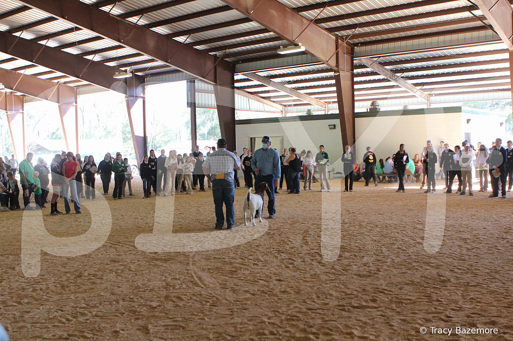 livestock2649