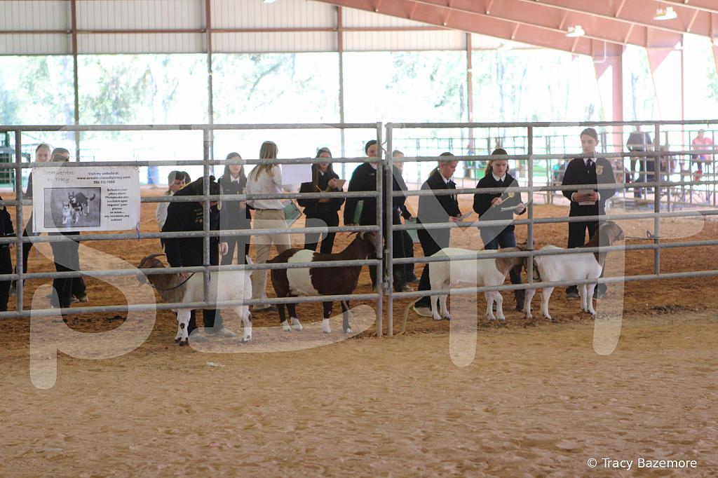 livestock2651
