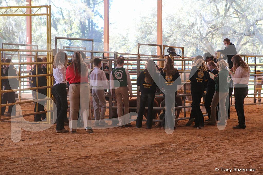 livestock2652