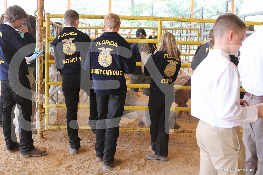 livestock2654