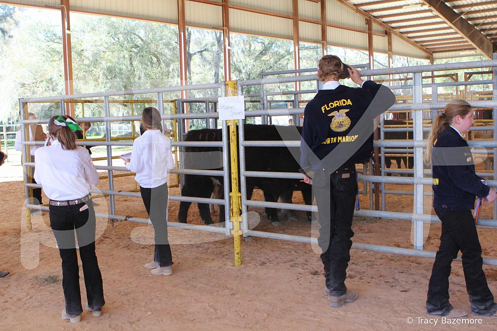 livestock2655
