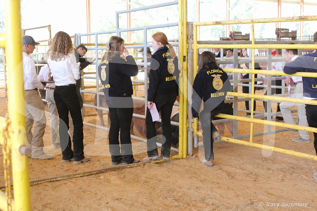 livestock2657