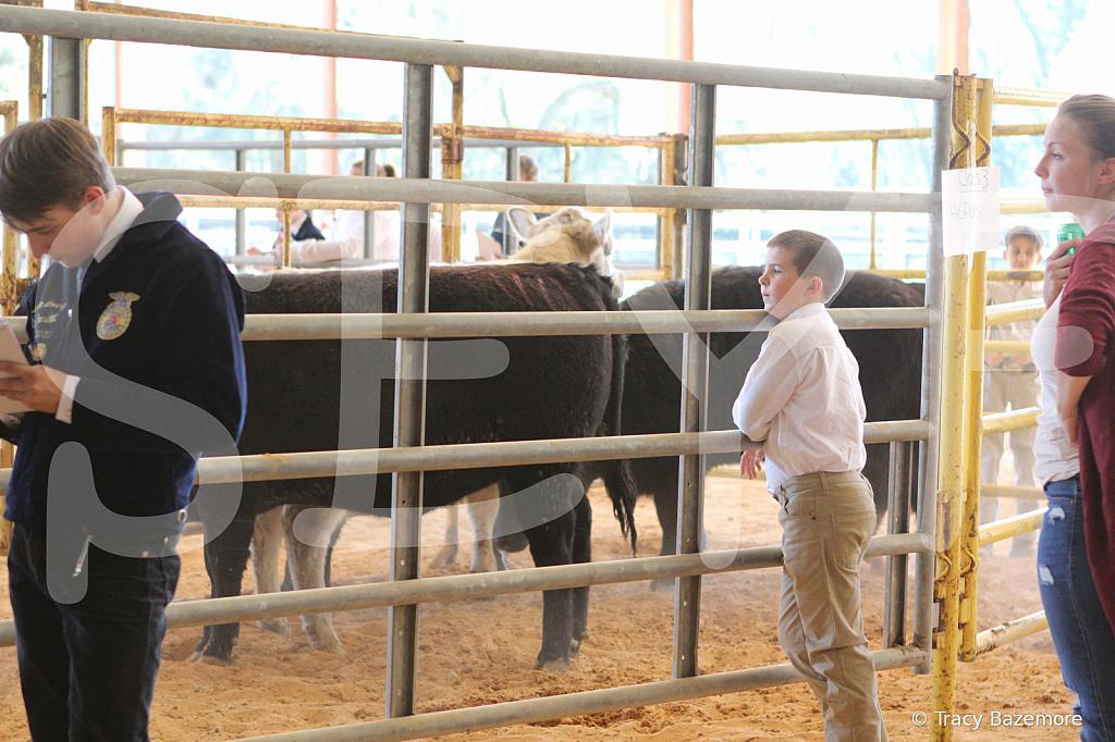 livestock2658
