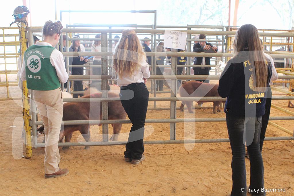 livestock2660
