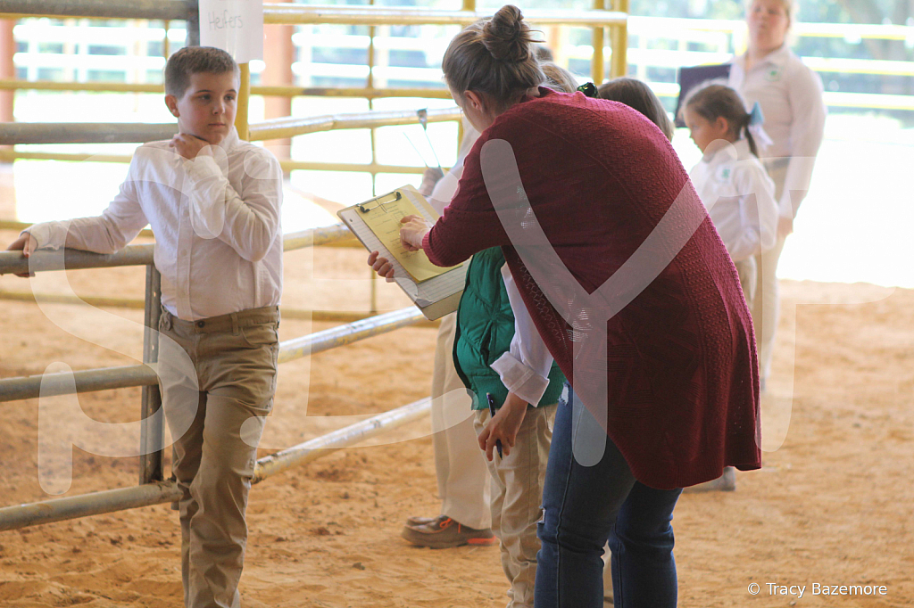 livestock2662