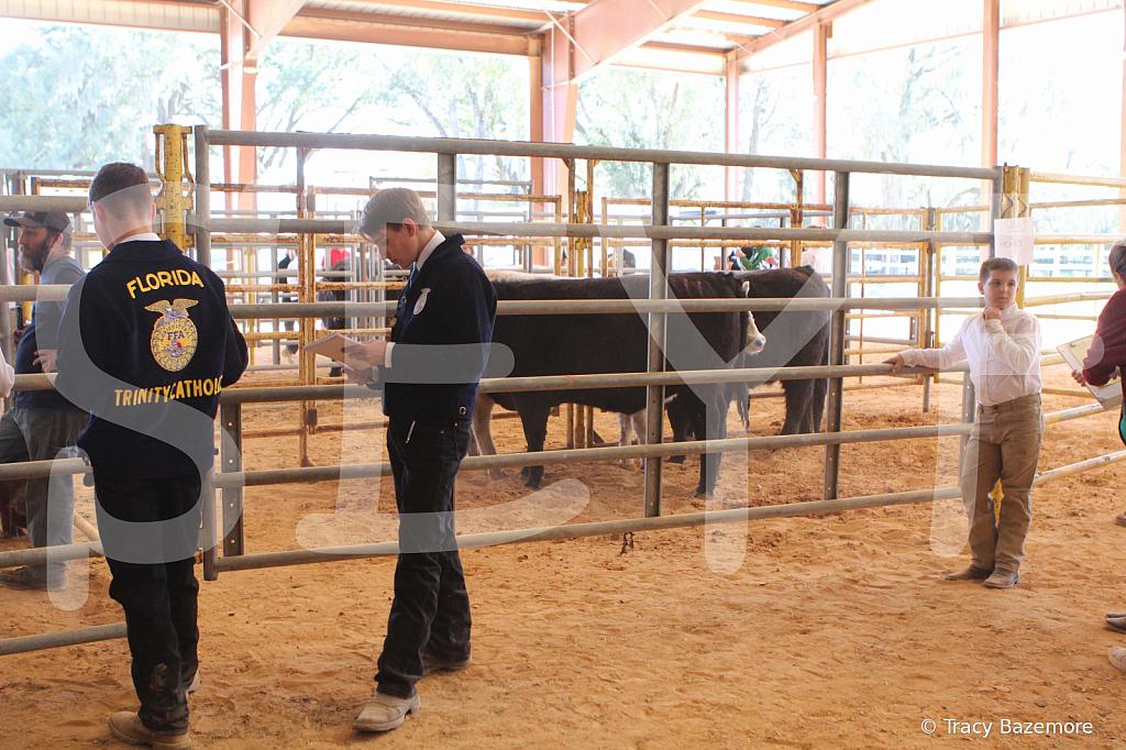 livestock2663
