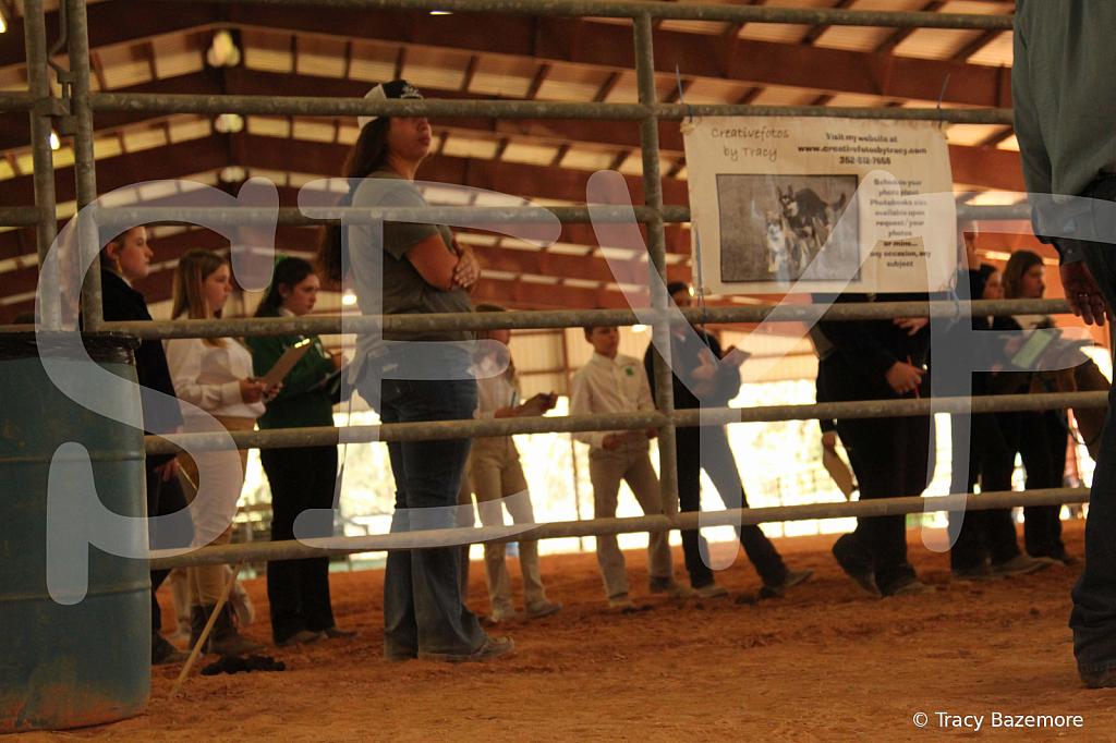 livestock5775