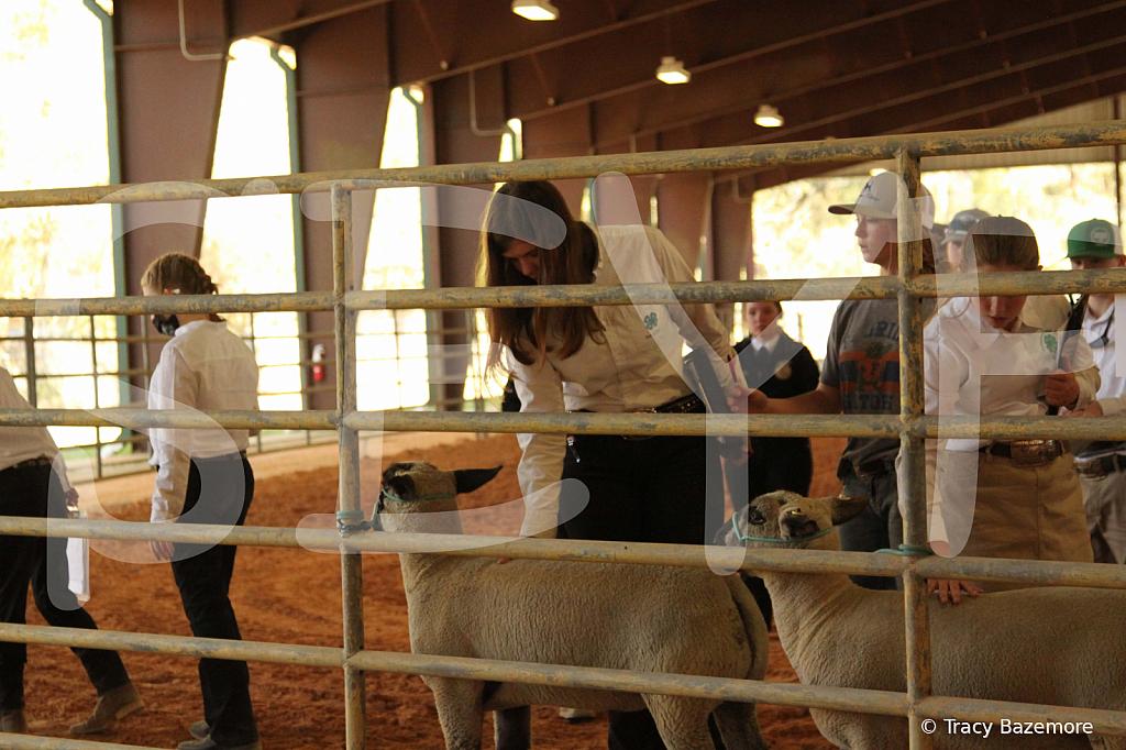 livestock5779