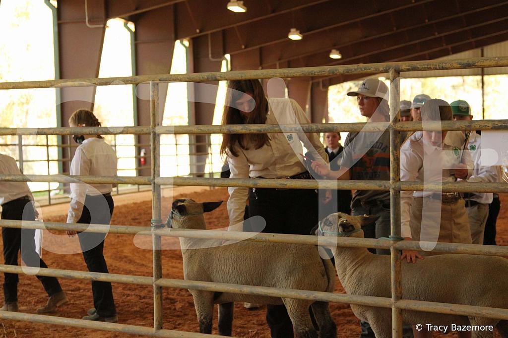 livestock5780