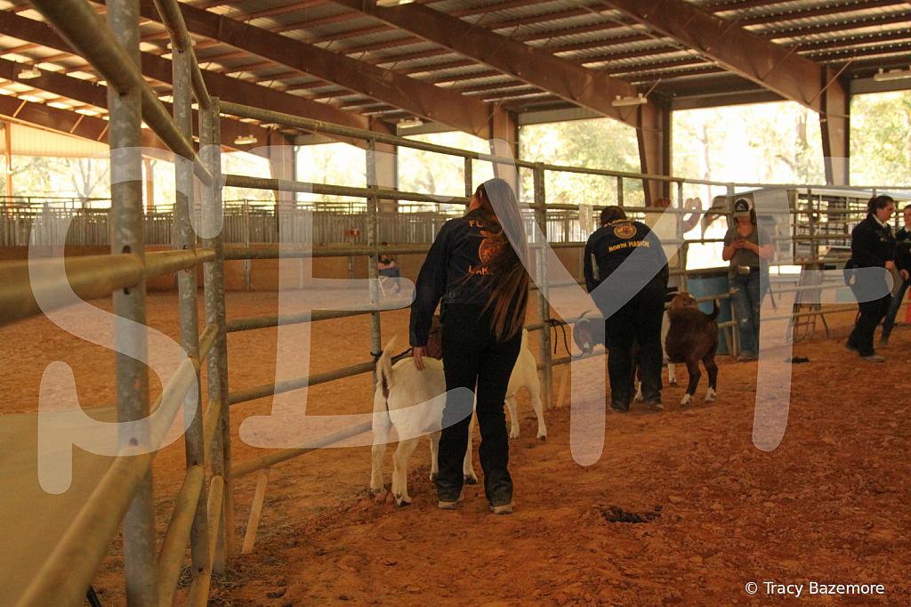 livestock5781