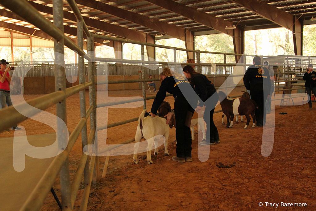 livestock5782